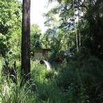 Gorgeous Daintree Rainforest Land with some unique opportunities !!Whyanbeel   thumb
